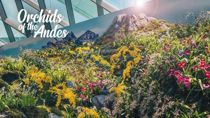 Orchids of the Andes
