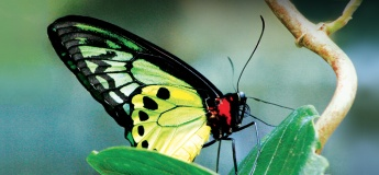 Butterfly Park & Insect Kingdom - Sentosa