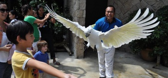 Animal & Bird Encounters - Sentosa