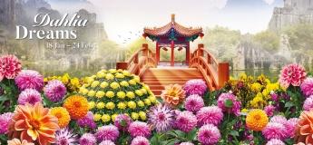 Dahlia Dreams Floral Display