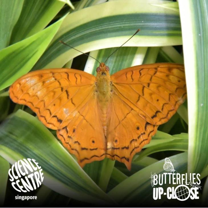 Butterflies Up-Close