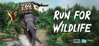 Safari Zoo Run'19