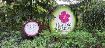 Healing Garden Tour @ Singapore Botanic Gardens