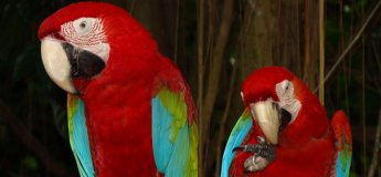 Animal and Bird Encounters @ Sentosa